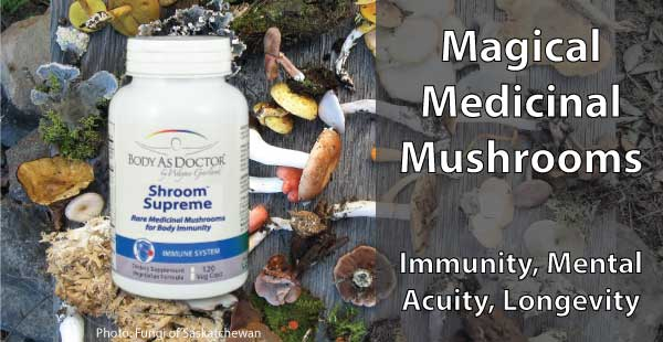 Shroom Supreme - the Power of Medicinal Mushrooms
